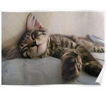 Mikino enjoying an afternoon snooze Poster