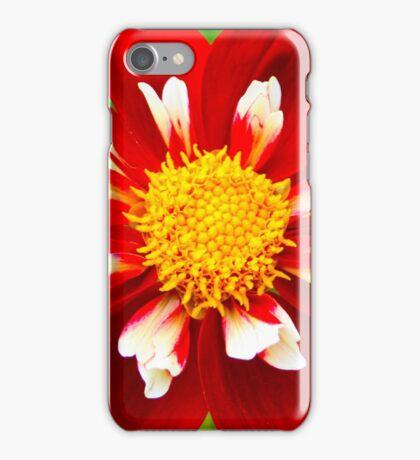 Dahlia Christmas Carol iPhone Case/Skin