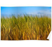 Wheat Field Poster