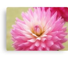 Soft Pink Dahlia Canvas Print