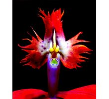 Fowl Mouthed - Orchid Alien Discovery Photographic Print