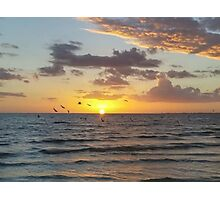 Resting Gulf Photographic Print
