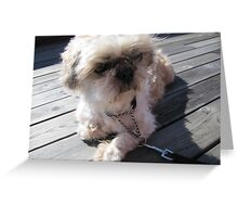shih tzu thinking Greeting Card
