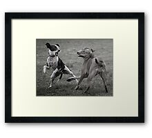 Dogs with game face on .10 Framed Print