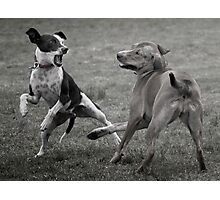 Dogs with game face on .10 Photographic Print