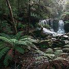 Horseshoe Falls by Chris Allen