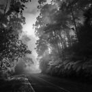 Mt Donna Buang by Christine Wilson