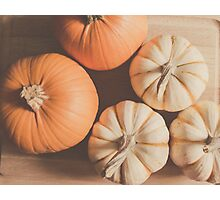 Pumpkins 4 Photographic Print
