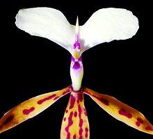 Deer in Headlights - Orchid Alien Discovery by ©Ashley Edmonds Cooke