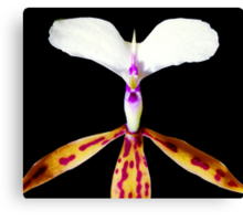 Deer in Headlights - Orchid Alien Discovery Canvas Print