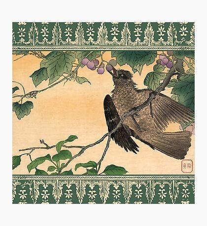 Japanese Bird Eating Grapes Photographic Print