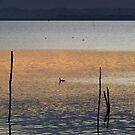 Layers of dusk, Lago Trasimeno, Umbria, Italy by Andrew Jones
