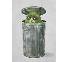 Grouchy Cat  Photographic Print