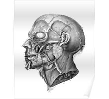 Vintage Anatomy Facial Muscles Poster