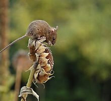 Mouse dinner by Eivor Kuchta