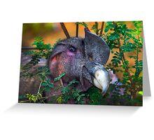 Andean Condor At Amaru II Greeting Card