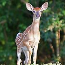 A young white tailed deer by jozi1