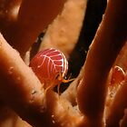 Sea Flea, Henry Head, Botany Bay by Erik Schlogl
