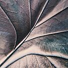 Leaf Abstract by SexyEyes69