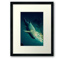 Resting Shark Framed Print