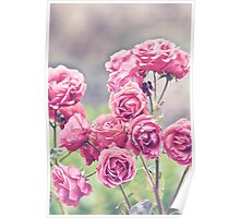 Plant Me Pink Roses Poster