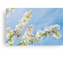 Frühlings Tage Canvas Print