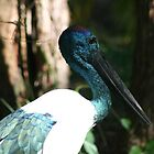Jabiru or Black-necked Stork by Marilyn Harris