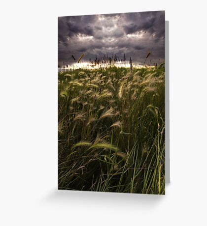 Prairie Grasses Northeastern Colorado Greeting Card