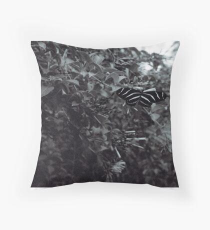 Zebra Butterfly in B&W Throw Pillow