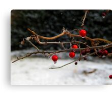 Frozen Holly Berries Canvas Print