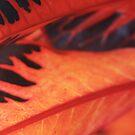 Orange leaf Horizontal by BengLim