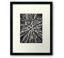 Pine forest converging tree tops black and white art photo print Framed Print