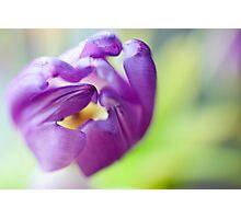 Tulpen Schönheit Photographic Print