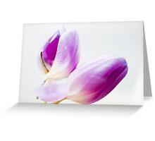Tulpen Schönheiten Greeting Card