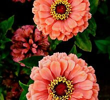 Zinnias - Art Deco by T.J. Martin
