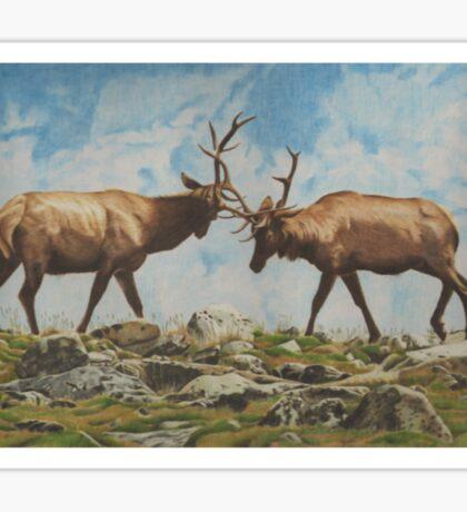 Elk Bulls Fighting Sticker