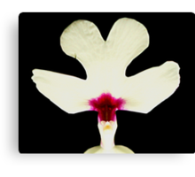 Nice Rack!  - Orchid Alien Discovery Canvas Print