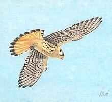 Flying Hawk by Vknoll