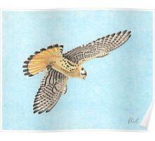 Flying Hawk Poster