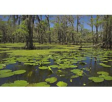 Cypress Swamp Photographic Print