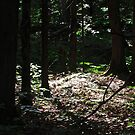 Light in the Forest by Shulie1