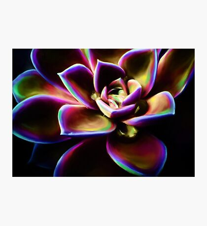 RAINBOW SUCCULENT Photographic Print