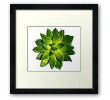 MINI GREEN SUCCULENT MANDALA Framed Print