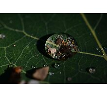 MacroDeisgn Water Droplet Photographic Print