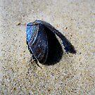 midnight blue shell by Karen  Betts