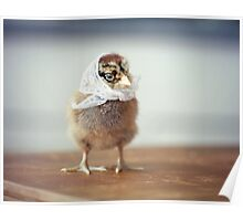 Baby Chicken in a Tiny White Scarf Poster