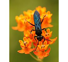 Black Wasp on Orange Photographic Print