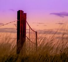 Sunset over the Farm Gate by Julia Harwood