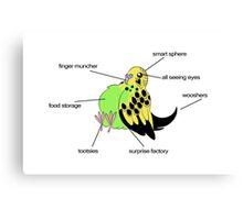 Anatomy of the Parakeet Canvas Print