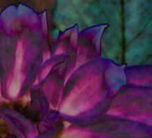 Purple Petals by Winona Sharp